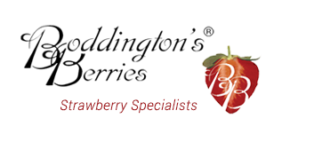 Boddington's Berries - Strawberry Specialists - Premium Strawberry Conserves